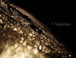 catch the rain. by this-is-the-life2905