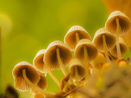 shrooms... by clochartist-photo