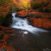 the road of the leaves @ acasa by Pod-Photography
