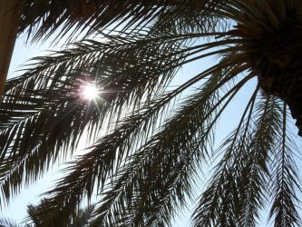 sun through the palm tree by MayarG