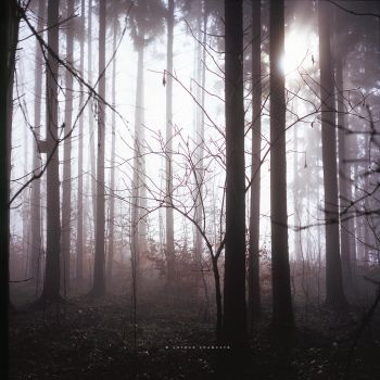 Fog Forest by DREAMCA7CHER