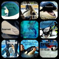 Captive Orcas are... by Thylacinus1