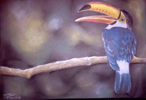 Toucan by Andreth