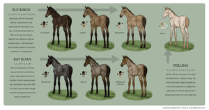 Equine Colour Guide :: Bay 2 by MistyofSunrise