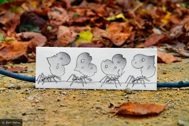 Pencil Vs Camera - 39 by BenHeine