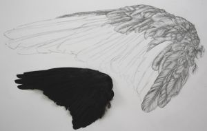 wing of a crow by SwarzezTier