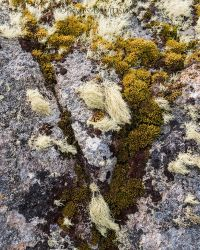 Lichen Detail 2 by slayer-of-moments