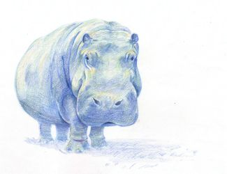 Hippo--Pencil Crayon by artofMilica