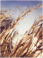 Nothing but the wind by Daniel-Wales-Images