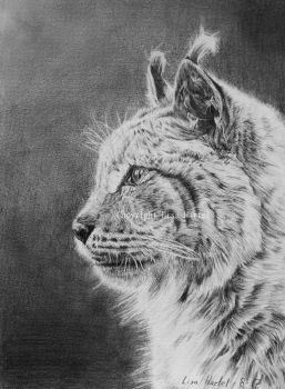 Lynx portrait by BeckyKidus