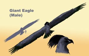 Giant Eagle Male by Spearhafoc