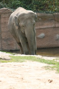 view to elephant by ingeline-art