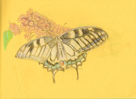 Swallowtail on Lilac by Moondancer3