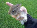 Baby bunny by XD-385