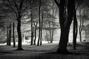 Urban Forest by tfavretto