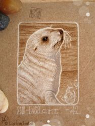 42 - Antartic Fur Seal by Loisa