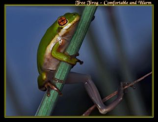 Tree Frog Comfortable and Warm by boron