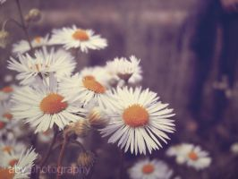 chamomile by aby192