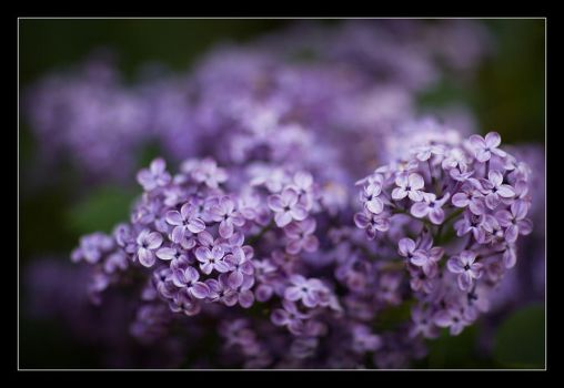 Scent of Spring... by ChrismonRow