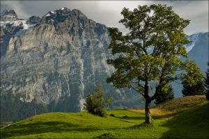 The lonely Tree by FrederikM