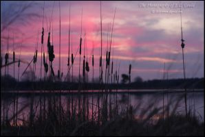 Cattails In The Sunrise by ThisWomanWanders