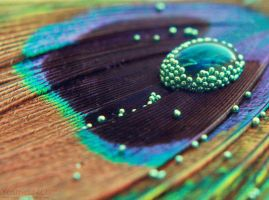 Peacock Feather by YasminNich