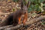 Squirrel II by Zouberi