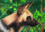 African Dog - ACEO by Sofera