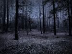 dark woods stock 1 by venomxbaby