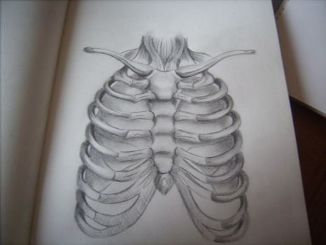 Sketchbook: Rib cage and lungs by AmyLouiseZombie