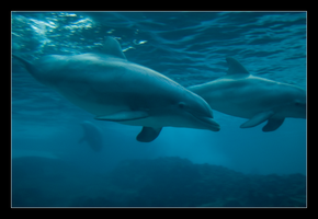 Dolphins by hoboinaschoolbus