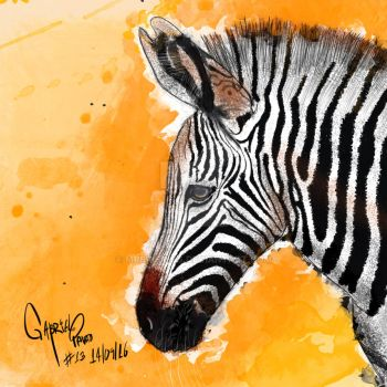 Grevy Zebra by MrBrisings