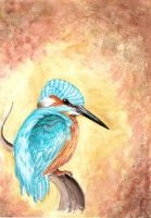 2010-03-18.-.Kingfisher by TheHOINK