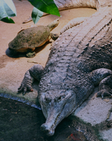 reptiles turtle and crocodile by mr-tiefenrausch