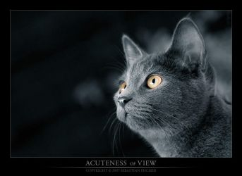 Acuteness of View by martyrer