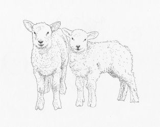 Lambs by LeilaBattison