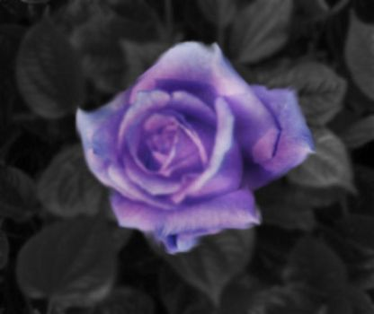 A Rose By Any Other Name... by SolaKelilah