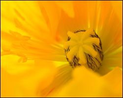 hairy yellow by justfrog