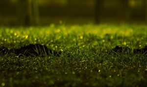 Green Grass by RKv15