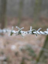 Barbed Wire by GorgoNL