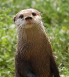 Otter by smithmar01