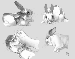 Cappuccino's Studies by Krossan