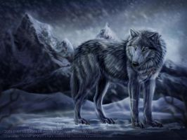 Tsume from Wolf's Rain by FelisGlacialis