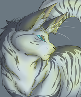 Jayfeather by Soft--Cookie
