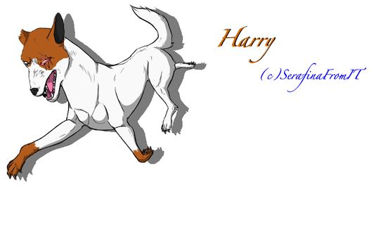 Ginga OC: Harry by nightwindwolf95