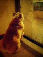 the dog and the window by candy-addict