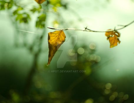 autumn it is by hpot