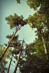 Trees. by Dianisiss