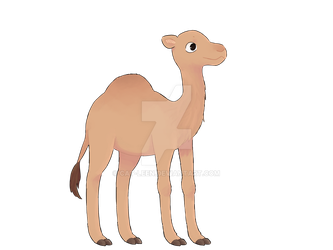 Baby camel by Cat-Leen