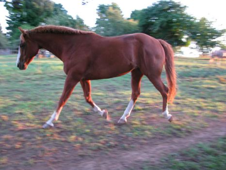 Trotting boy by Horse101Luver2010